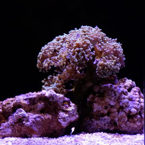 coral in an exhibit