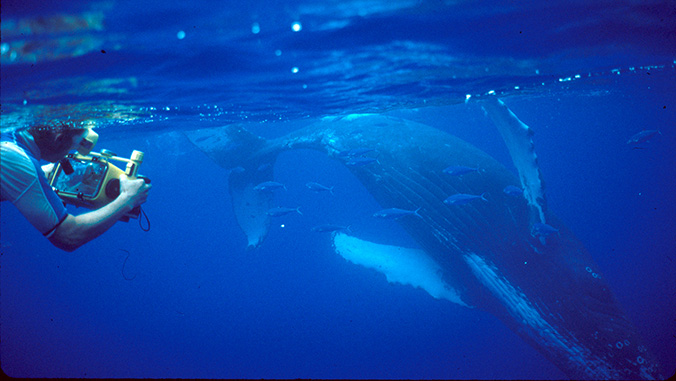 Researcher with humpback whale underwater