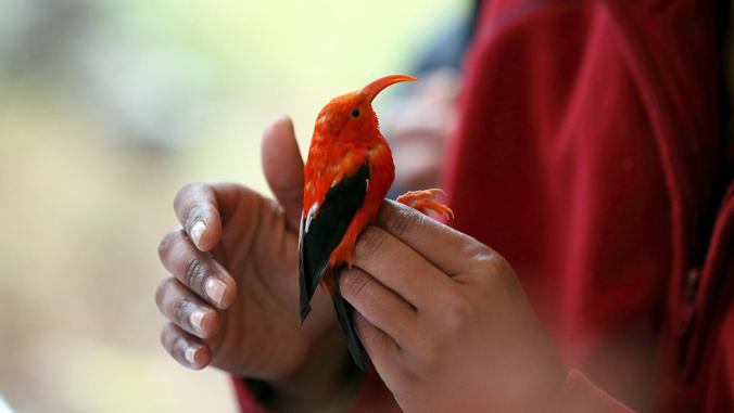 hands holding a bird