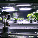 Space plants project could be astronaut game changer