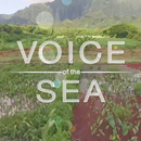 Voice of the Sea wins five Telly Awards