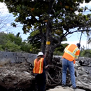 UH Mānoa groups, agencies team up to tackle impacts of climate change