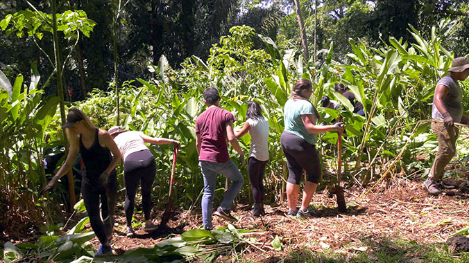 students working at Lyon Arboretum