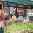Camp ʻImi-Possible leads students on exploration of native insect life
