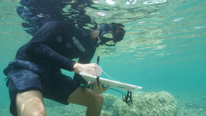 student surveying reef