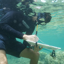 UH Hilo students apply data science to reef research