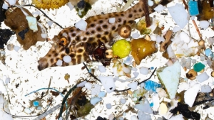 fish among plastics