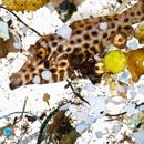 Alarm raised as plastics found in ocean fish larvae
