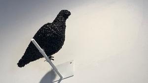 Koro Ihara Bird
