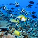 Can aquaculture help repair Hawaiʻi's economy?