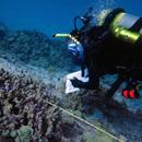 Studying human disease reveals coral disease risk factors