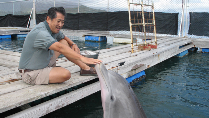 Whitlow Au touching dolphin's nose