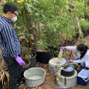 COVID-19 in Honolulu wastewater reflects levels of infection