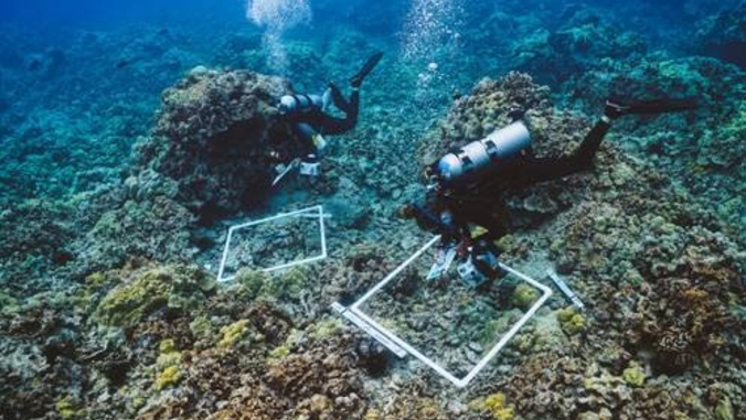 scuba divers taking photos of coral
