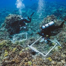 Collaborative coral study compares old, new scientific techniques