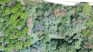 three different forest plots in Costa Rica