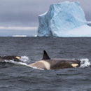 'Mind-blowing' Antarctic scenery, wildlife highlight research trip