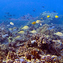 Saving coral reef fisheries with management areas