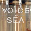 Hawai'i Sea Grant TV show wins multiple awards