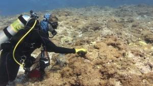 diver swimming next to algae