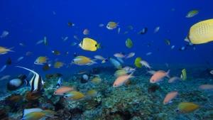 fish swimming in the sea