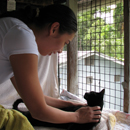 Pre-Vet students make a difference for Oʻahu shelter cats