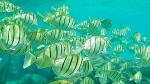 fish in Hanauma Bay