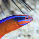 Fish diversity reduced in world's hottest coral reef