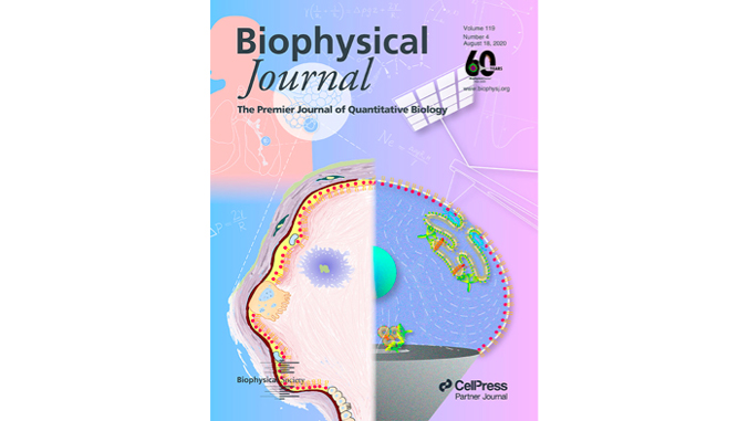 cover of Biophysical Journal with a brain and lungs