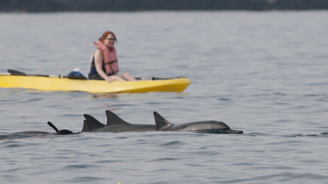people watching dolphins from a boat