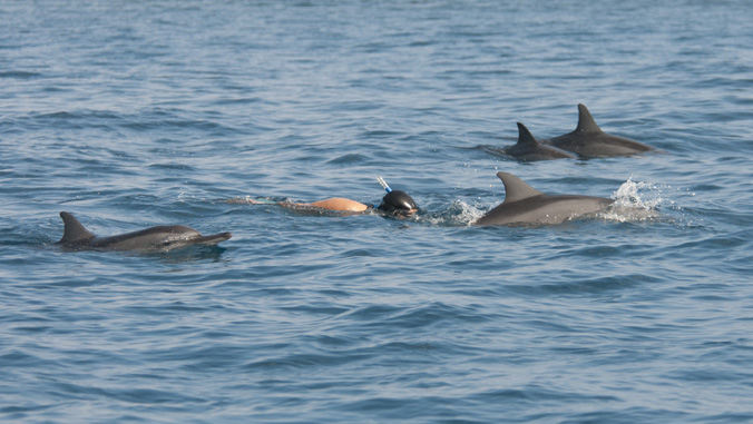 people swimming with dolphins