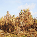 New funding supports drought predictions in Hawaiʻi, Pacific Islands