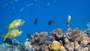 fish by coral reef