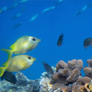 Nooks, crannies and critters: measuring the complexity of land, ocean habitats