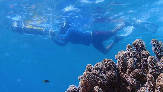 diver by coral reef
