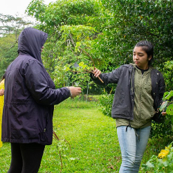 Hawai'i CC forestry program cultivates local experts