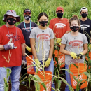 UH Hilo student-athletes stay active, harvest corn for community