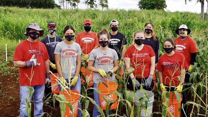 students harvesting corn