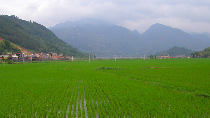rice patty below mountains in Fujian China