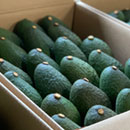 Holy guacamole! UH researchers to help national avocado production