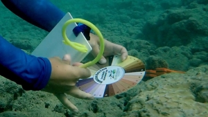researchers using card underwater