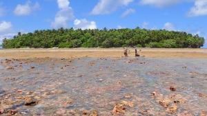 fossil reef flat