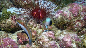 fish swimming by coral reefs