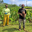 UH-grown taro feeds hungry communities