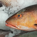 Closing Palau fisheries leads to lessons for Pacific