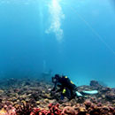 Coral recovery during El Niño offers hope for long-term survival