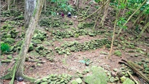 agricultural terraces in the forest and trees
