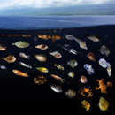 Ocean surface slicks create superhighway for diverse fishes