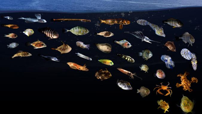 fish superhighway