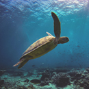 Turtles face 'daunting future' due to climate change, other factors